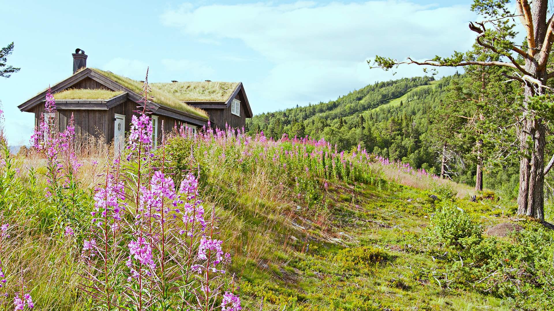 Holtardalen i Rauland er et populært område som stadig utvides med nye hyttefelt.
